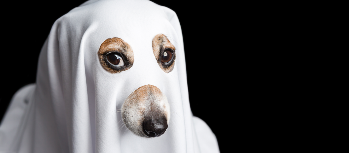 dog-ghost-sheet-cover.png